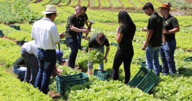 Alunos do Curso Técnico em Agropecuária fazem pesquisa com alface