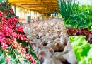 Setor agrícola movimenta cerca de 80% da renda de Marechal Floriano