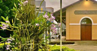 Marechal Floriano aproveita primavera para espalhar ainda mais orquídeas no município